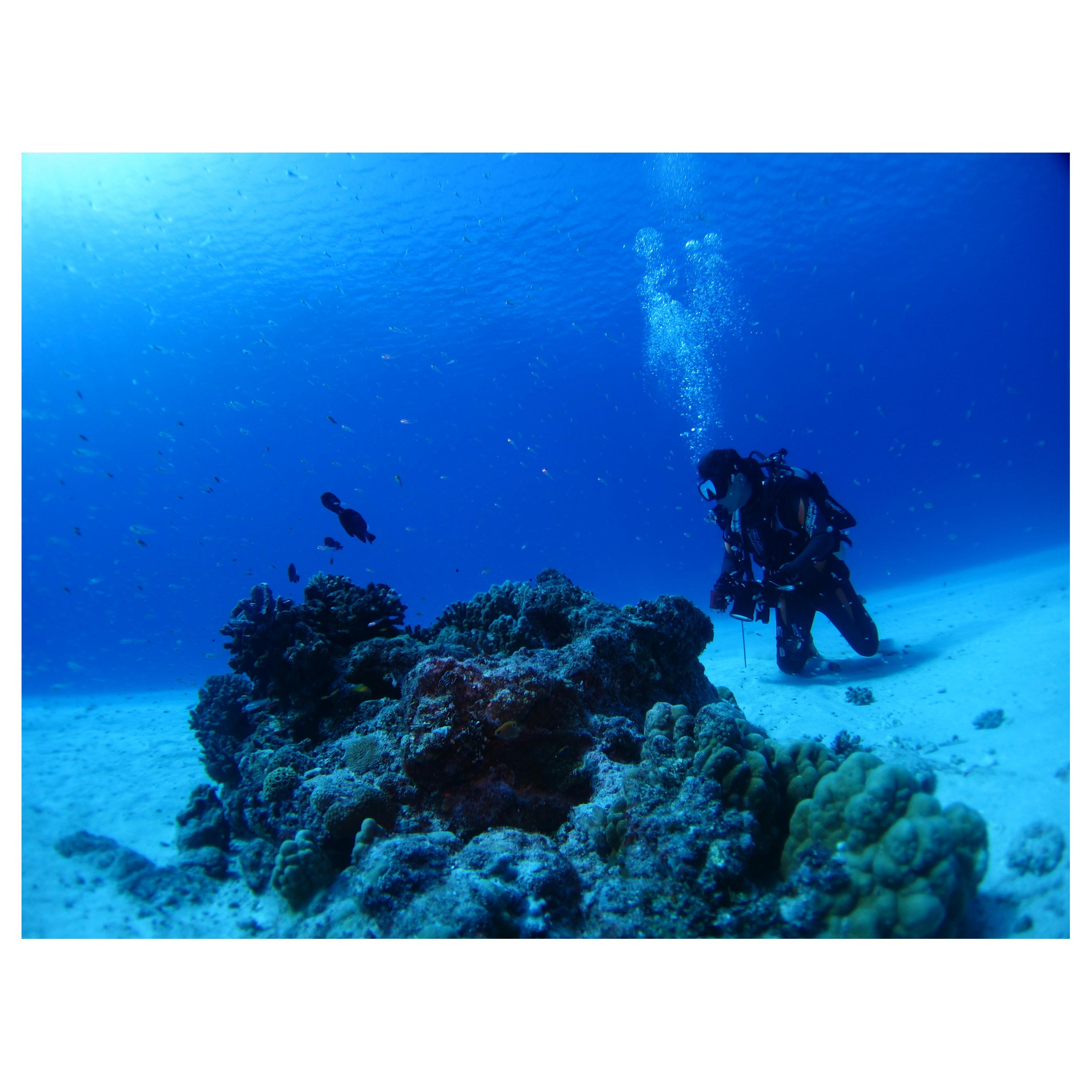 水中写真撮影、オリンパス 水中カメラ取扱説明、ダイビングスクール