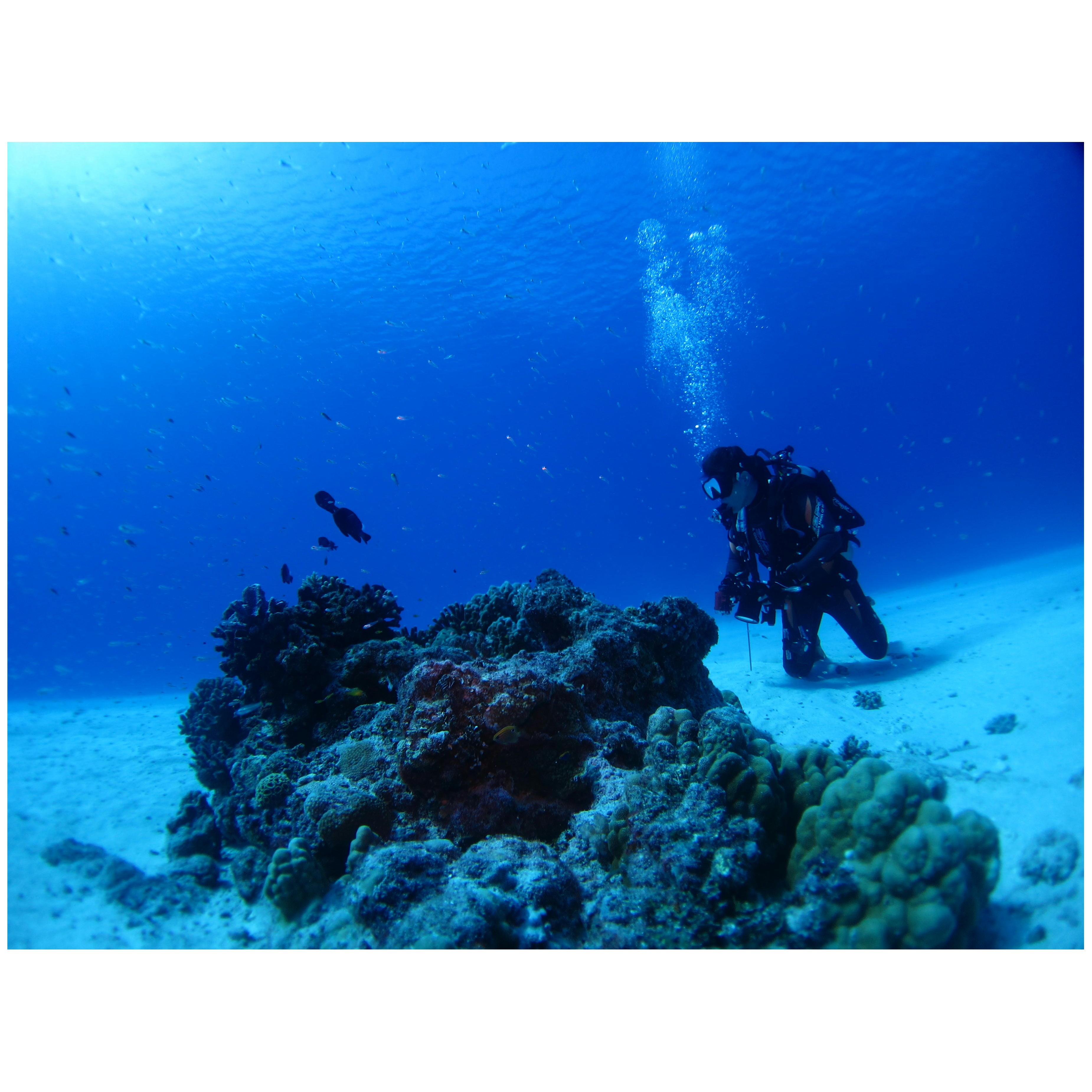 水中写真撮影セミナー