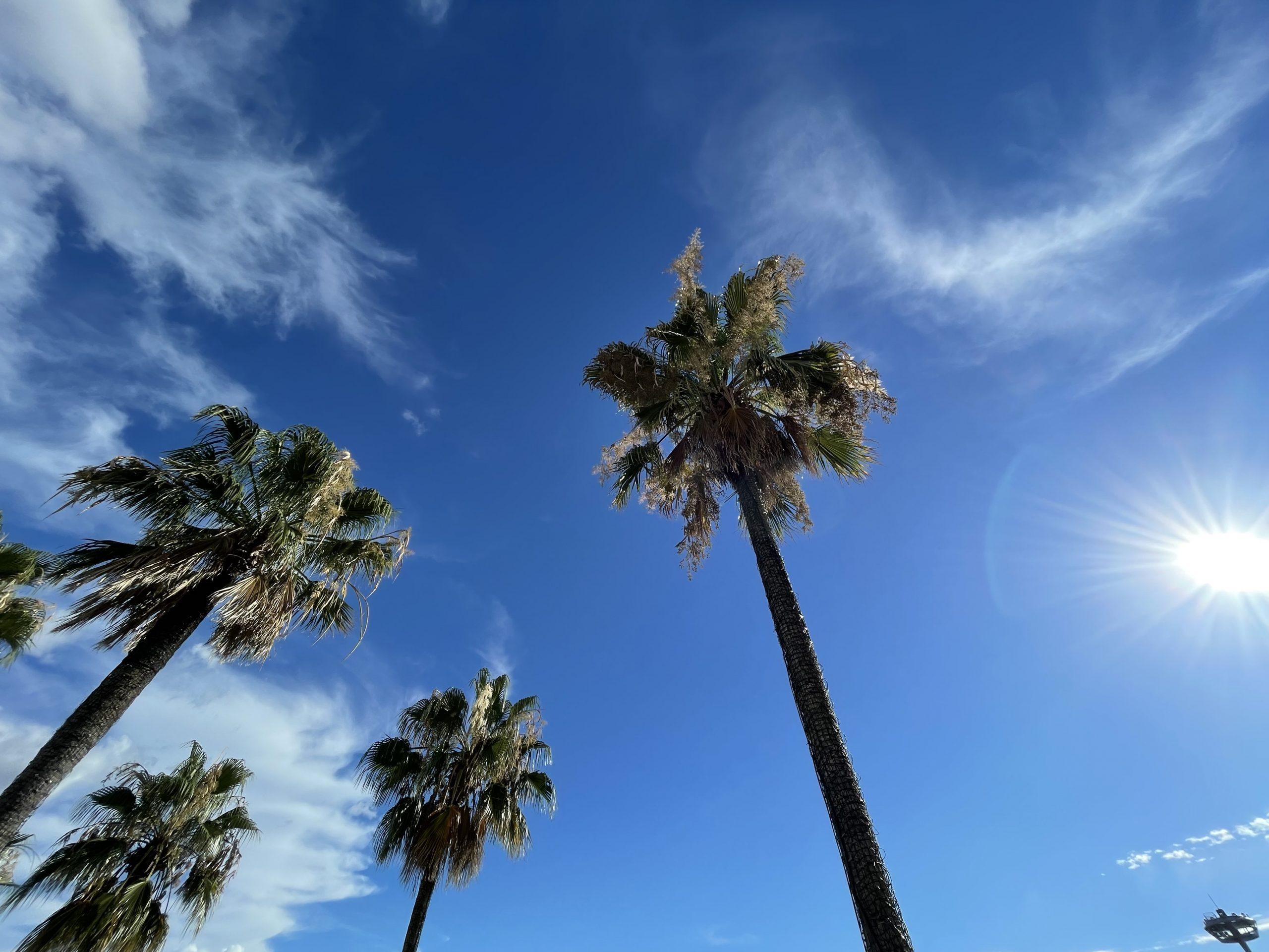 散歩中の青空